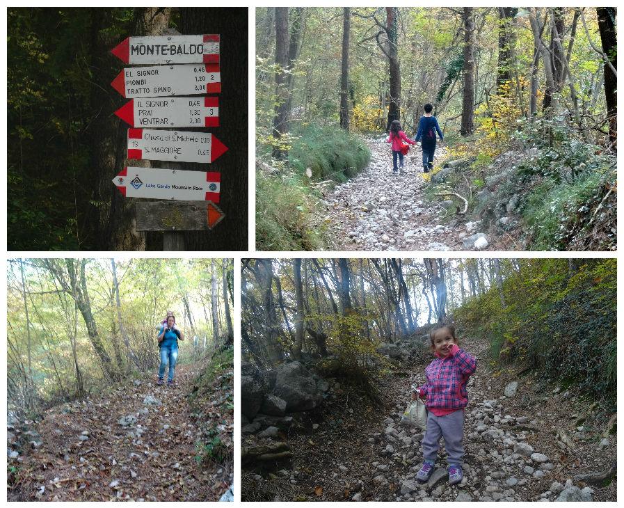 מסלול הליכה ביער