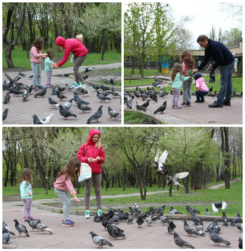 ציפורים בפארק