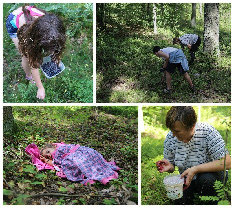 אוכמניות ביער